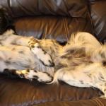 sleeping pose