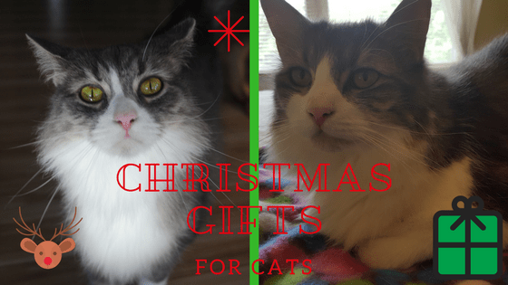 Christmas gifts for cats, adorable cats