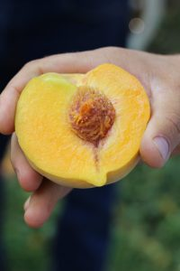PCP California Cling Peach | Stacey Mattinson Nutrition