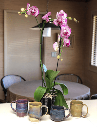 Mug display in front of orchid
