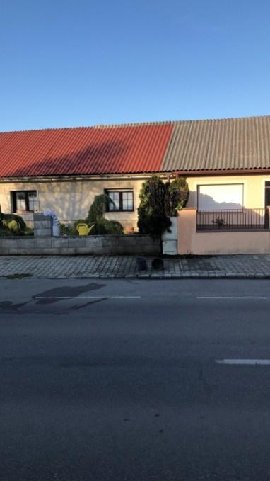 20200410_BE_Schäferhof_Thujenhecke_001