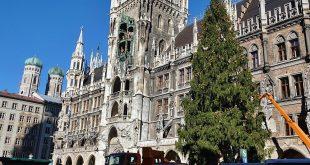 Der Christbaum am Marienplatz in München ist am 12.11.2018 aufgestellt worden. Er wurde von der Gemeinde Farchant gestiftet.
