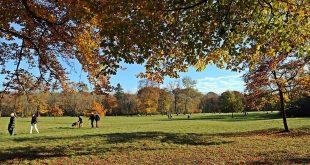 Herbst im nördlichen Englischen Garten München