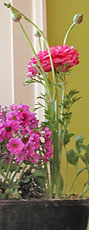Flowers by home staging expert Debra Gould