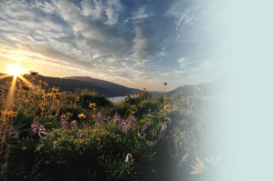 Large open meadow scene with multiple colorful flowers and a sunset over the horizon.