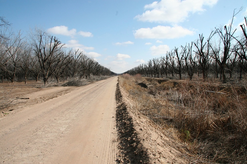 After pecan farmers pruned trees