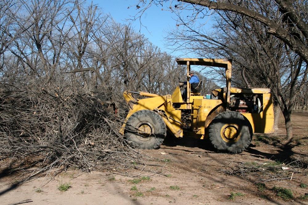 Pecan farmers cleaning up debris
