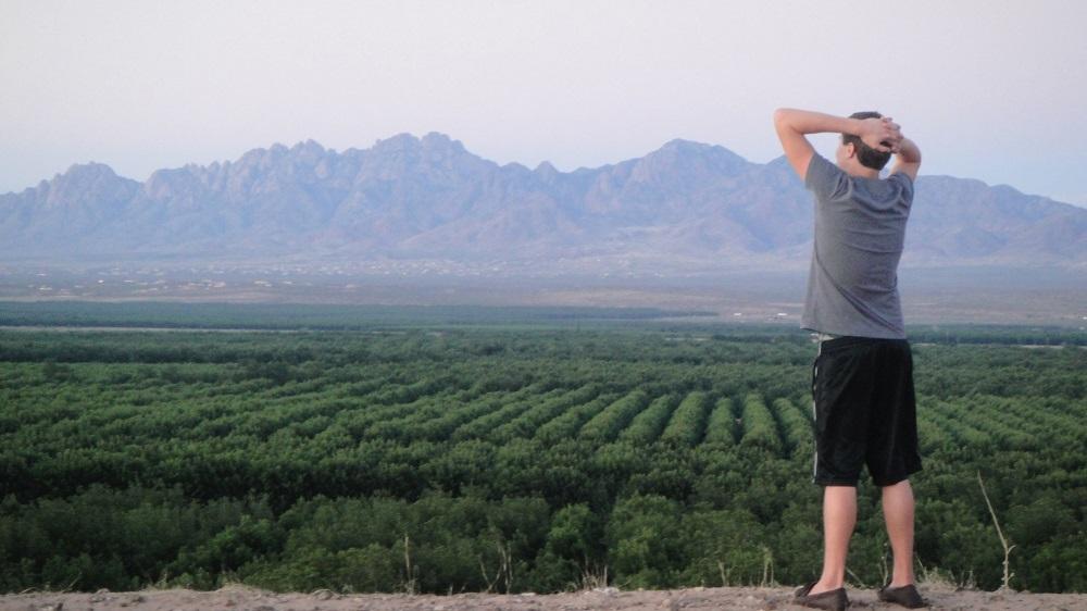pecan grower looking at pecan trees