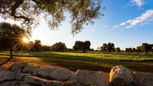 'Extraordinary Plan' to Revitalize Olive Trees in Puglia