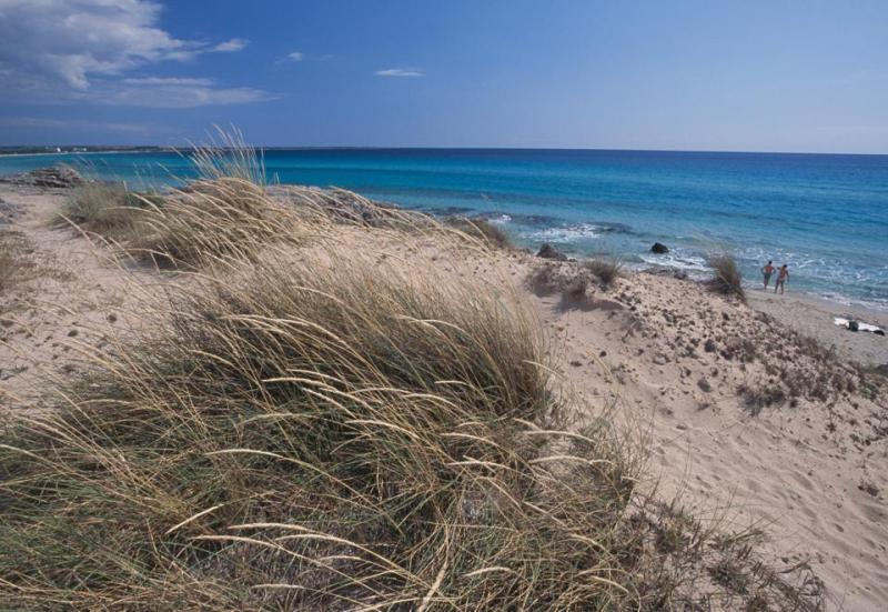 Marram Grass on the dunes of Salento, Apulia