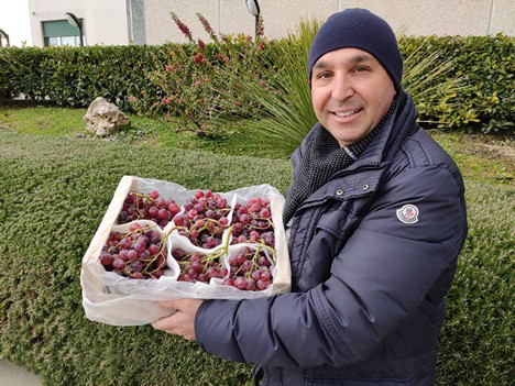 Crimson and Apulia table grape campaigns about to come to an end in Sicily -
