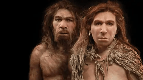 Neanderthals Did Not Go Extinct Because of Climate Change, New Research Finds – Dual Dove -