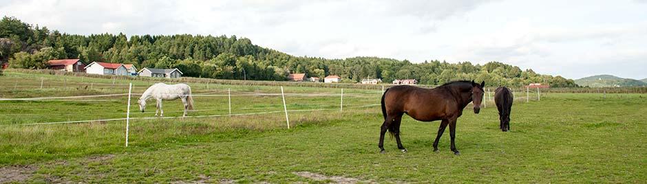 Hos Stall Alfhem kan du inackordera din häst på kortare eller längre tid. Vilka av våra tilläggstjänster du vill anlita oss för bestämmer du själv.