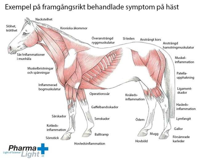 Exempel på framgångsrikt behandlade symptom på häst.