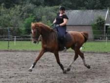 Linda rijdend op KWPN paard Kirkay tijdens een dressuurtraining