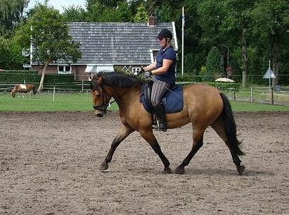 Ruiter op dressuurpaard tijdens dressuur training