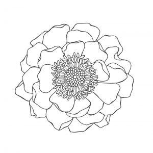 blended bloom