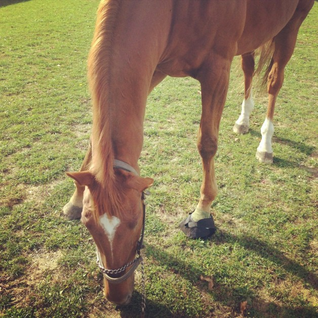 Grazing with a wet diaper boot on his foot