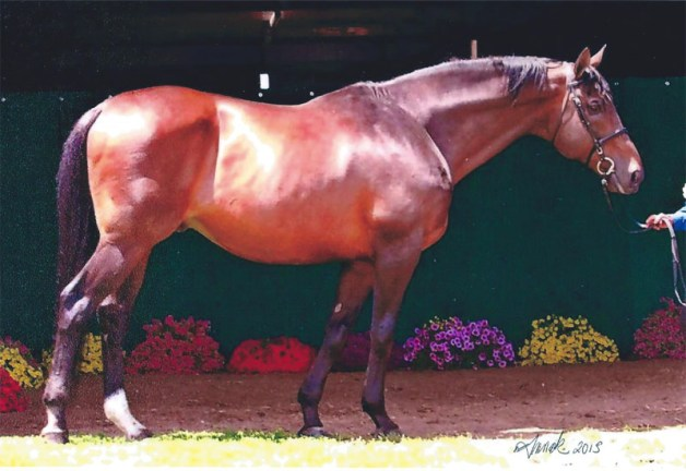 A more recent photo. Stampede did not require his sire's full beefcake status.