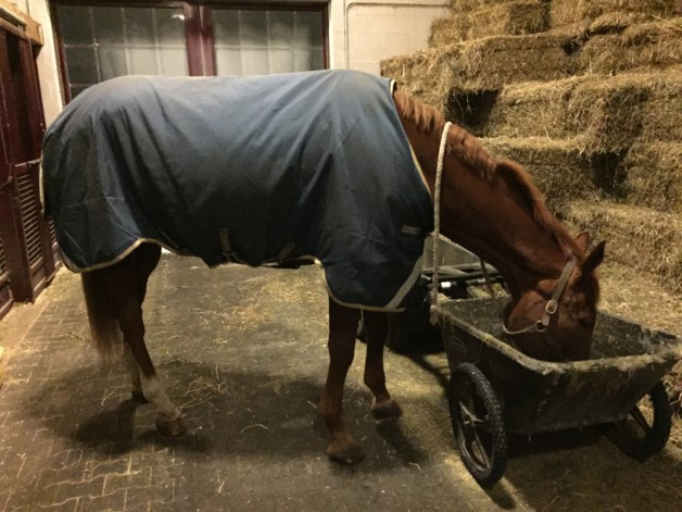 What we do when it's too cold to ride - go for walks and help clean up the hay cart