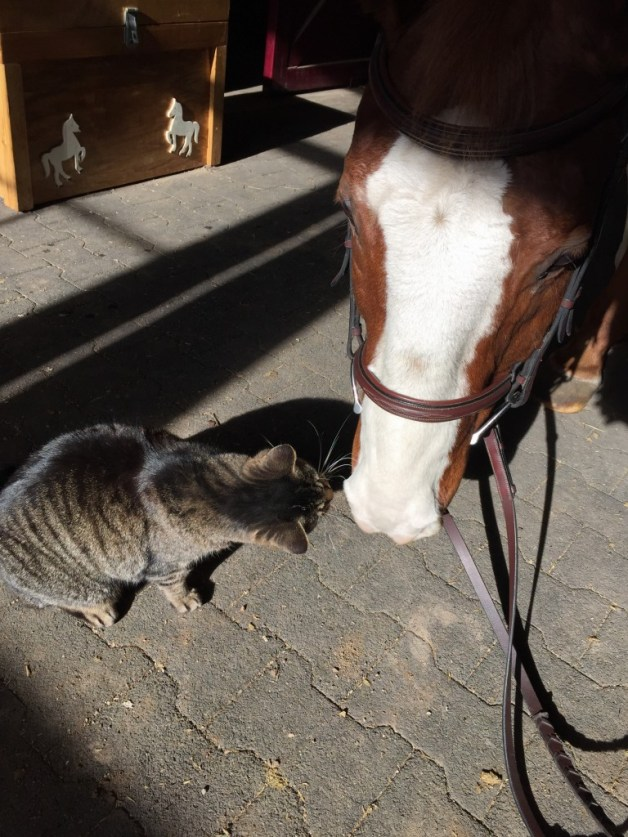 P saying hi to one of the barn kitties