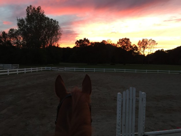 Sunset with Stampede