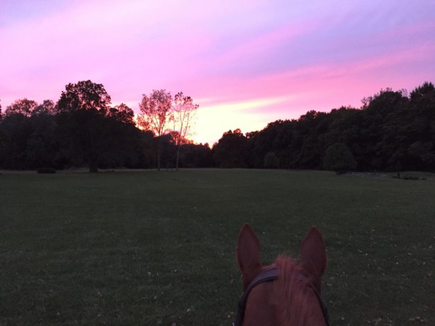 The spunkiest of ponies and a beautiful sunset
