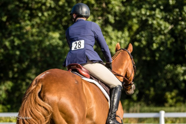 Don't you like his missing hair at the top of his butt? That's what happens when your horse sits on things for fun.