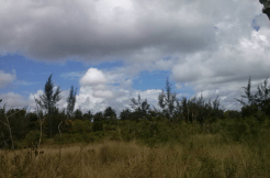 ¼ Acre Land For Sale Diani