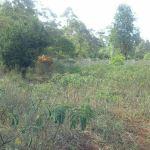 ¼ Acre Land for Sale in Karen