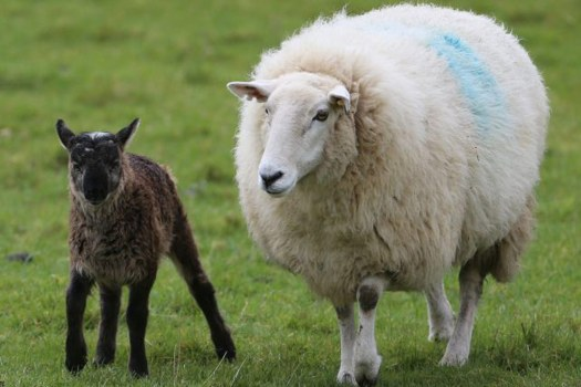 Paul O'Grady requests Lord Mayor of London to cancel sheep ...