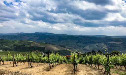 Vine to Barrel: Port Tasting from Alto Douro to Porto