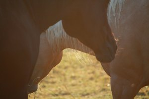 programs for horses at Unbridled-potential