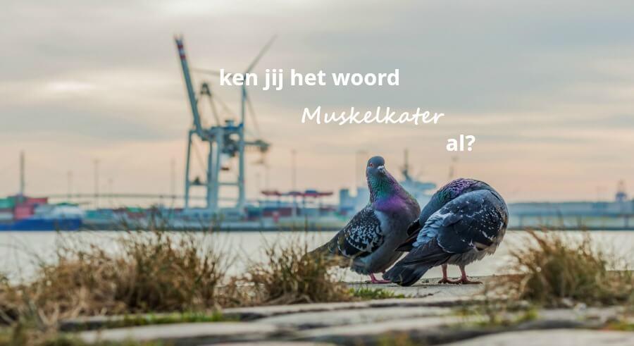 Muskelkater en andere mooie Duitsen woorden - Standort Hamburg