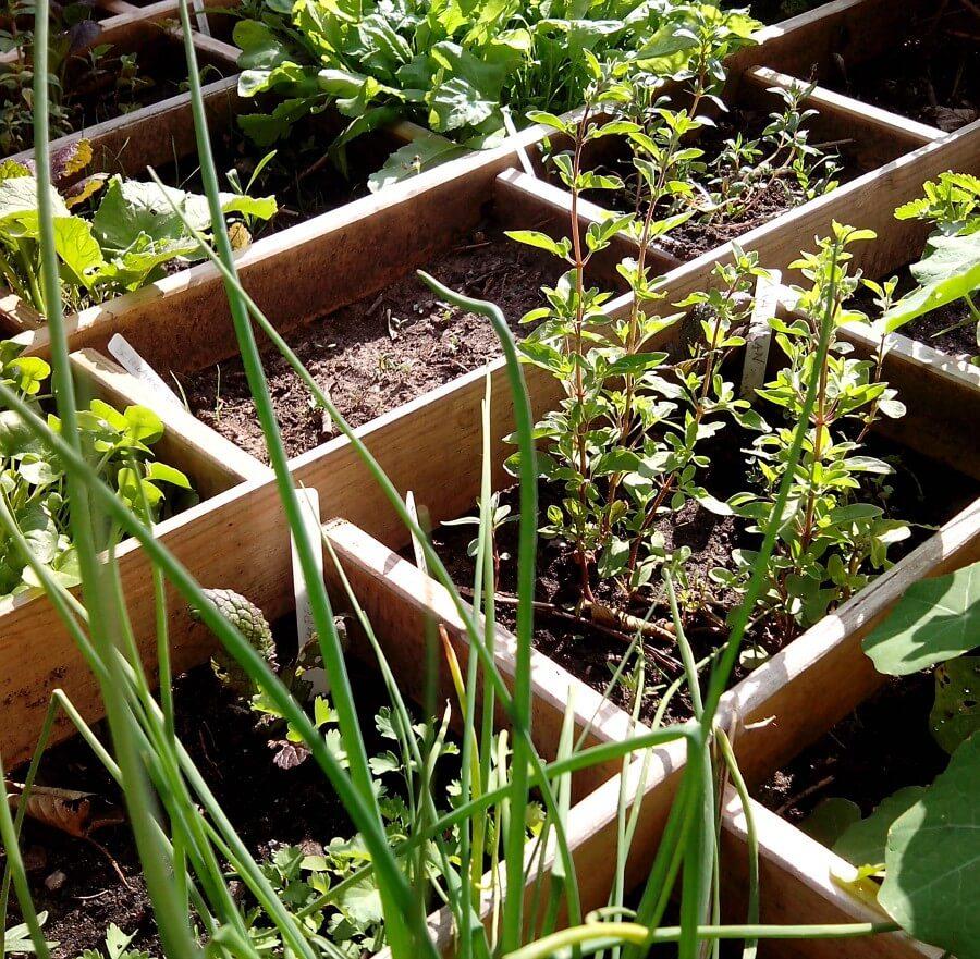 Kruidentuin bij Urban Garden Kebap in Altona