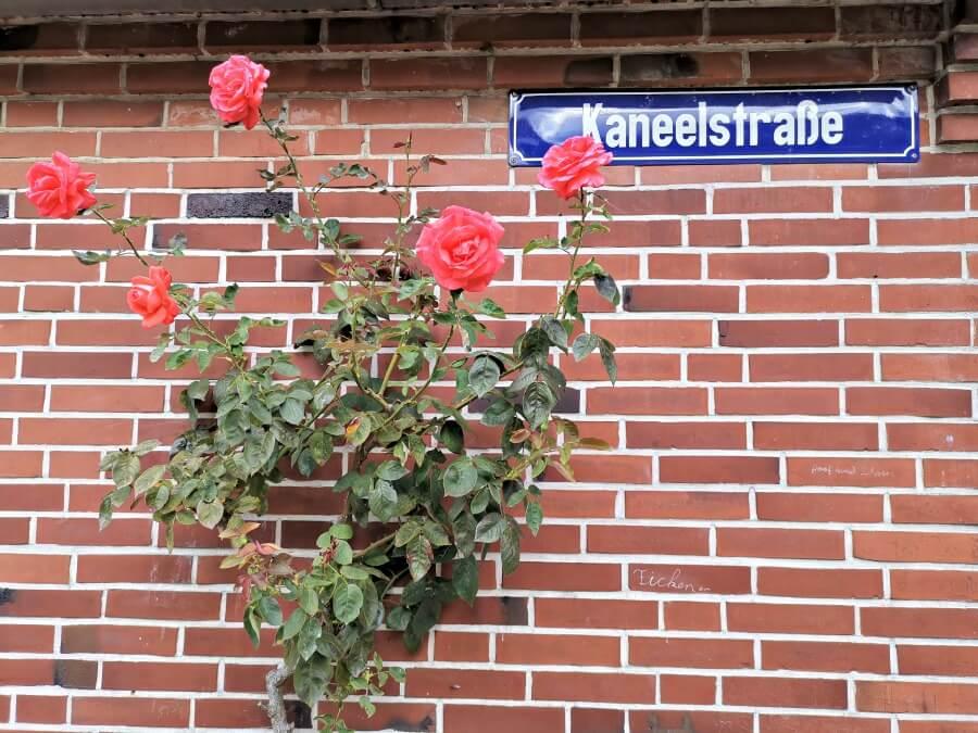 Bloemige gevels in Holländerstädtchen Friedrichstadt