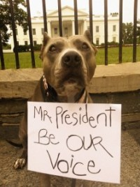 """Mr. President Be Our Voice""-Angel"