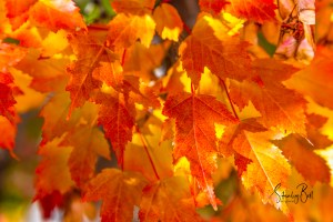 Colours of Autumn in Macro Gallery