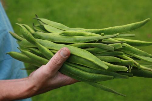 runner_beans