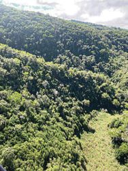 COURTESY COUNTY OF KAUAI                                 The site where a Safari Helicopters aircraft crashed Thursday, killing seven people, is seen in the mountains above Kokee, Kauai. NTSB lead investigator Eric Weiss said more details will be released today.