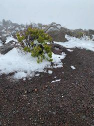 COURTESY NATIONAL PARKS SERVICE                                 Snow was seen at the summit of Haleakala today.