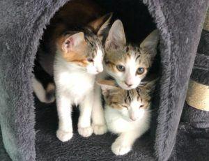 COURTESY HAWAII CAT CAFE