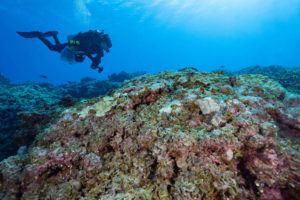 COURTESY KIMBERLY JEFFRIES/NOAA                                 Scientist Taylor Williams surveys algal growth at Kamole, or Laysan island, at Papahanaumokuakea Marine National Monument.