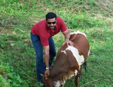 Pradeep Chandran with a Cow