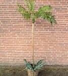 Kunstpalm bomen en planten te huur