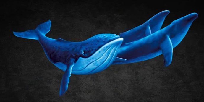 Balena Albastră vorbeşte limba serviciilor secrete ruse