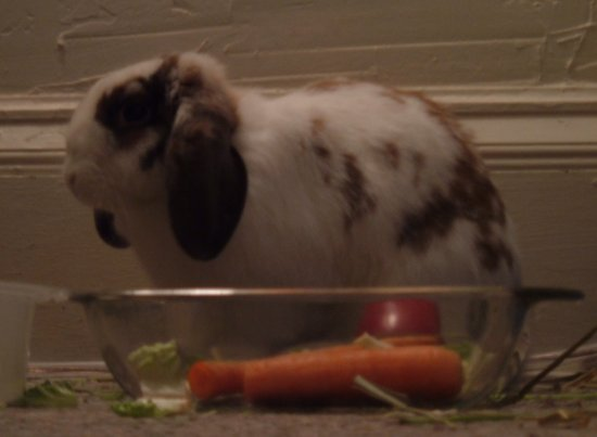 betsy in her food bowl