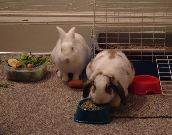 bunnies eating