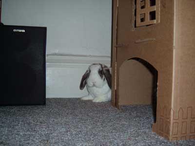 Betsy Hiding