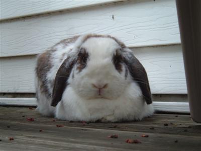 bunnies-on-moms-porch-012-custom.jpg